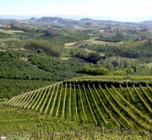 vigne-langhe